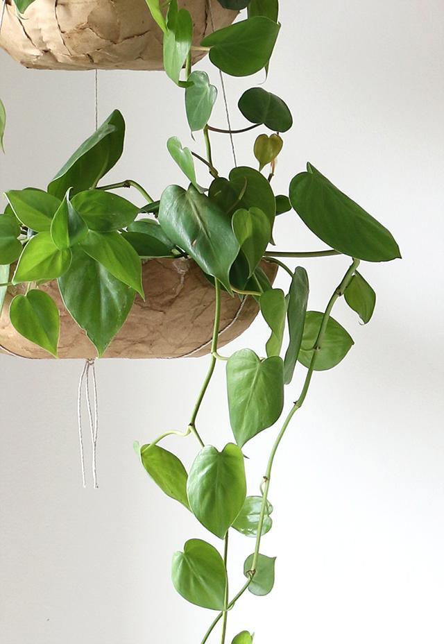 Paper Mache Planter