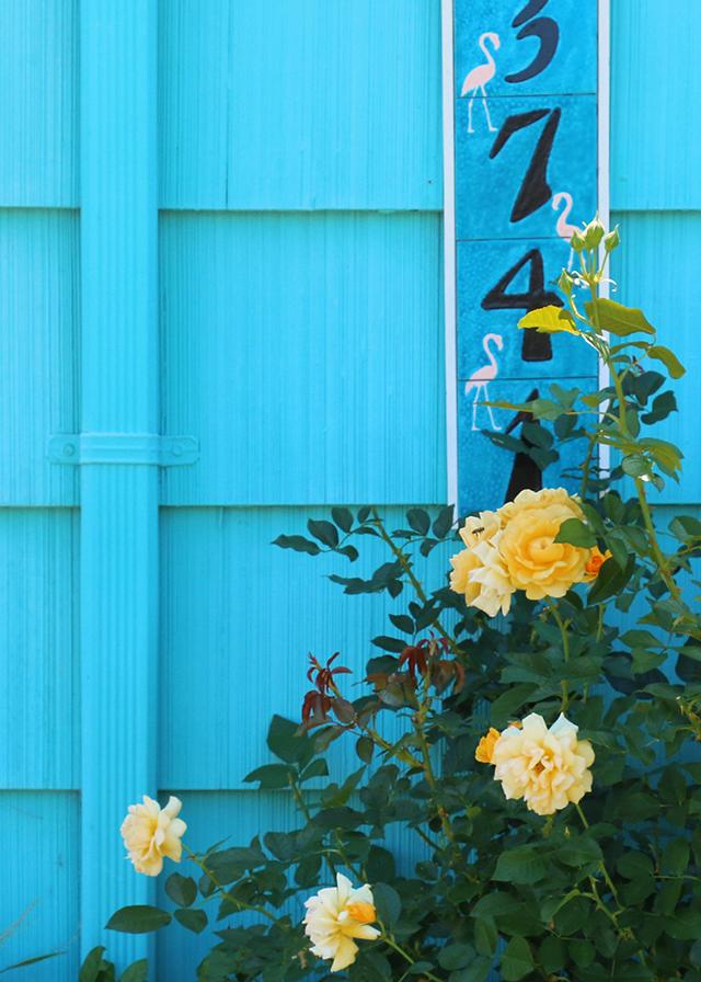 Blue House Garden