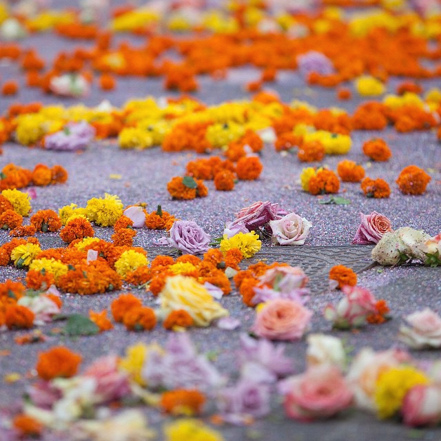 Glitter and Flower Street