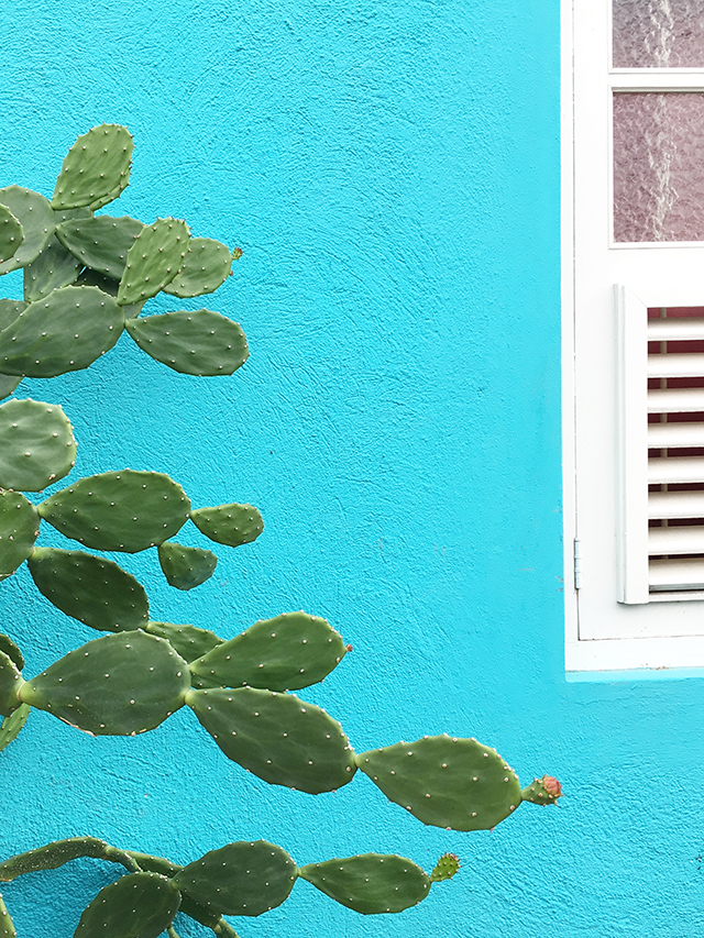Cactus Wall