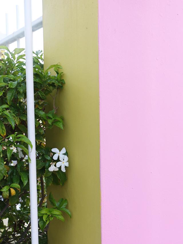 Pink Yellow Wall