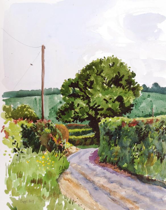 hertfordshire-hedges