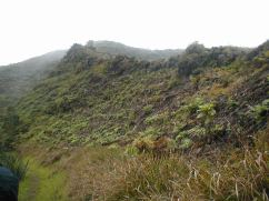 Flax cleared areas with regenerating tree ferns