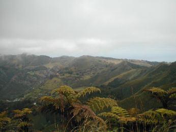 Ferns on top of thepeaks
