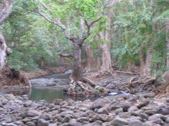 In the Black River Gorge