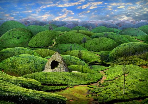 Tea Hills - Photo Collage