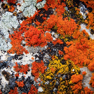 Liken the Lichen – Gros Ventre, WY