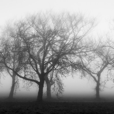 A Walk in the Fog - Discovery Park, Seattle, WA