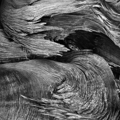 Twisted Juniper – Arches N.P., Moab, UT