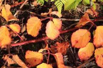 autumn-colours4