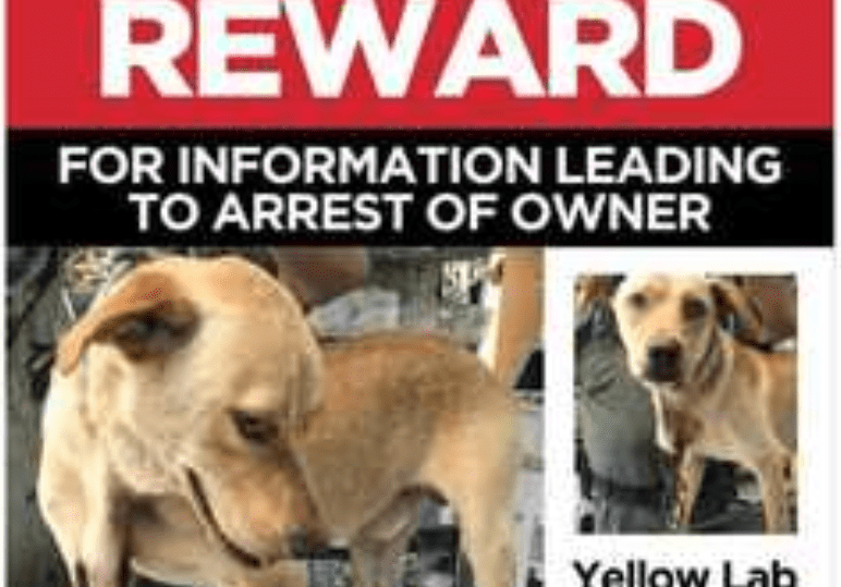 Deputies Search for Owner of Dog Found with Carabiner in Neck