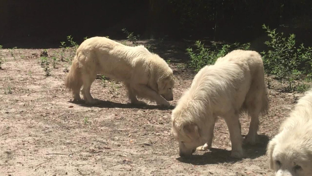 87 Dogs, Cats Rescued in Florida Hoarding Case
