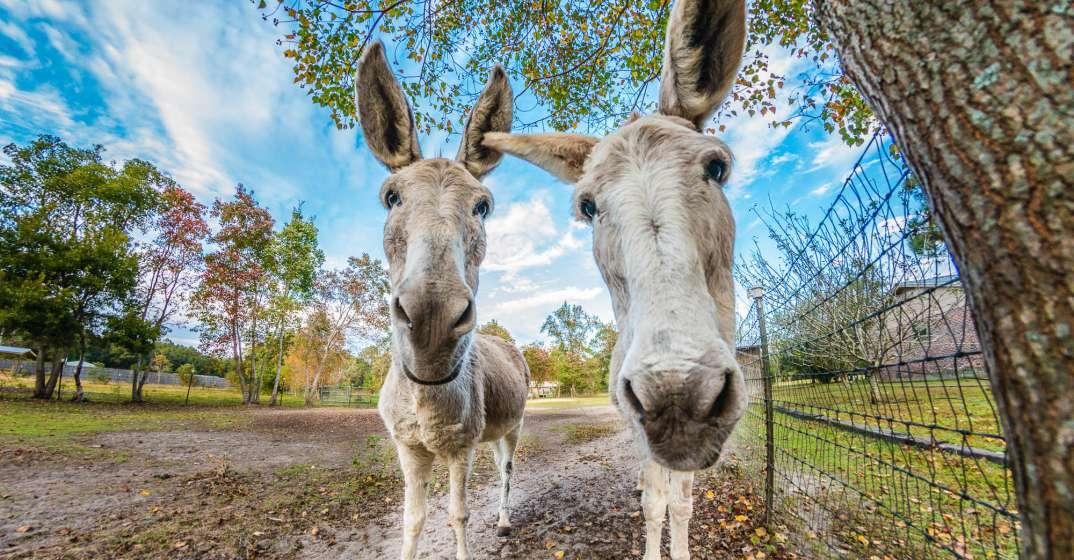 donkeys at Alaqua Animal Refuge