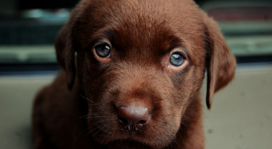 Donate to Alaqua puppy eyes