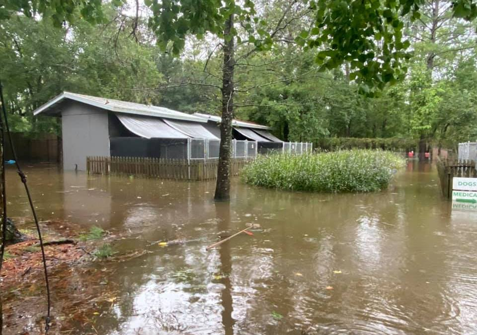 From Flood to Forever Home: Alaqua Animal Refuge Announces Plans to Move to Future Home