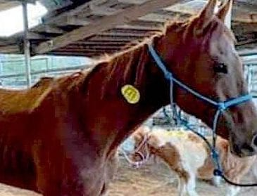 Alaqua Animal Refuge Rescues Former Race Horse from Kill Lot, Seeks to Spread Awareness