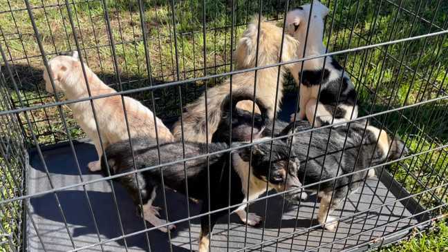 Alaqua Animal Refuge Saves 19 dogs from Neglect