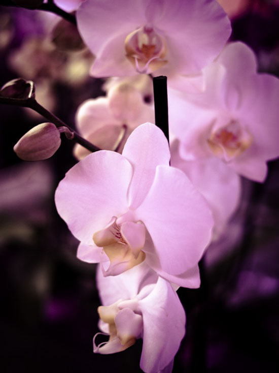 Some damn orchid