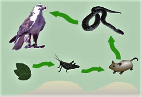 La insólita coquetería de la Naturaleza