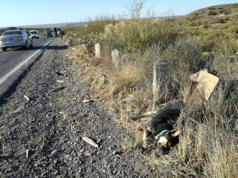 Catriel25Noticias.com ac-carro3-484x363 Ruta 151. Se desprendió un carro y chocó con un camión, un herido leve. (Video) Destacadas NACIONALES