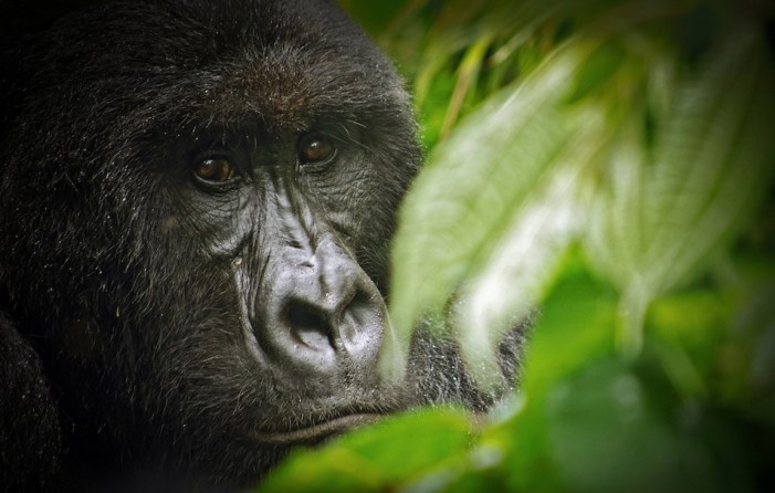 Oil-related Corruption Alleged in DRC Park