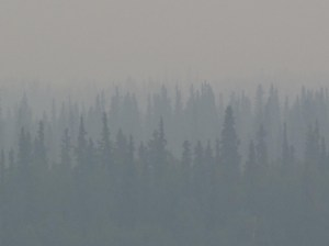 Burned Alaska forest might be the start of a different ecosystem. Photo by Ned Rozell.