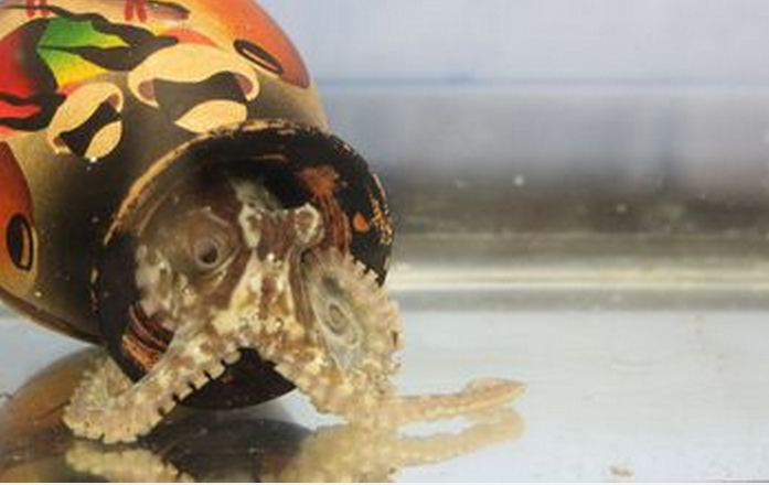 First-Ever Octopus Genome Sequenced