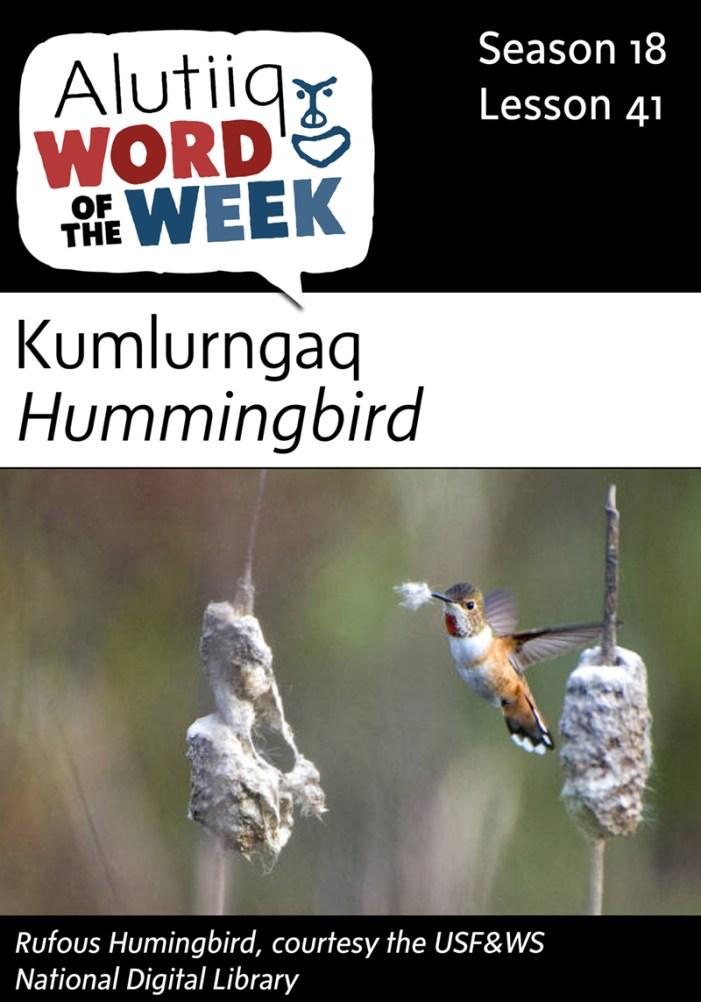 Hummingbird-Alutiiq Word of the Week-April 3rd
