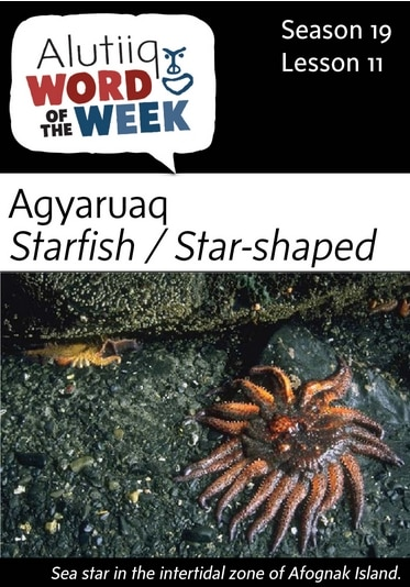 Starfish-Alutiiq Word of the Week-September 11th