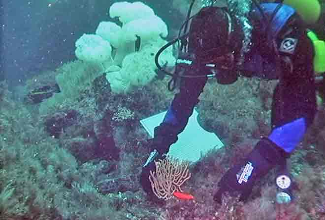 Fish Habitat Formed by Slow-Growing Corals may Recover More Slowly in a Changing Climate