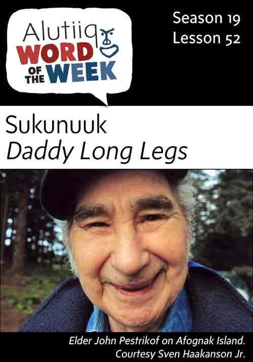 Daddy Long Legs-Alutiiq Word of the Week-June 25th