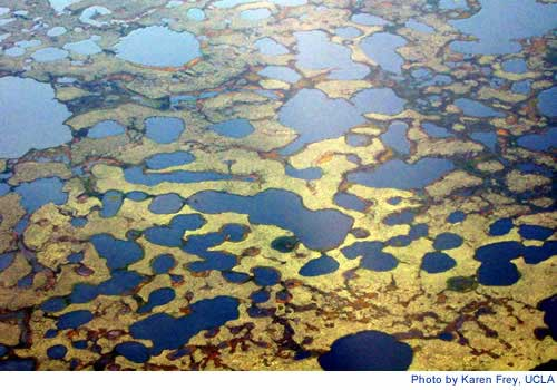 Study finds Mercury Levels in Arctic Soils 5 Times Higher than Temperate Regions