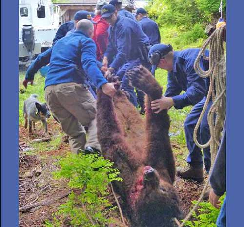 Troopers Locate, Dispatch Bear Wounded by Sitka Homeowner on Tuesday Night