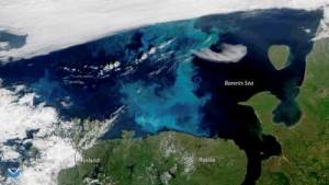 This true-color image, captured by the NOAA-20 satellite on July 30, 2018, shows a large phytoplankton bloom in the Barents Sea. Credit: NOAA Environmental Visualization Laboratory