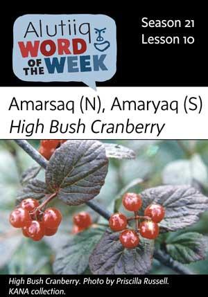 High Bush Cranberry-September 2nd