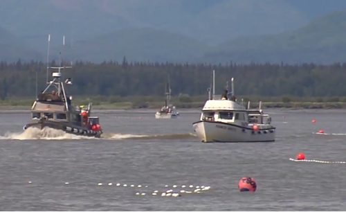 Alaska's 206.9 Million Salmon Harvest Valued at $657.6 Million