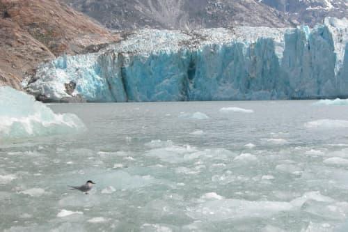 Southeast Alaska Faces Great Ocean Acidity Impact