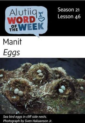 Eggs-Alutiiq Word of the Week-May 12th
