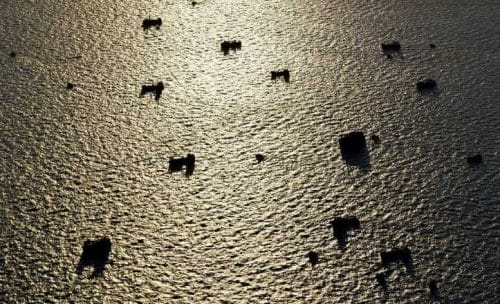 Bristol Bay Sends out an SOS