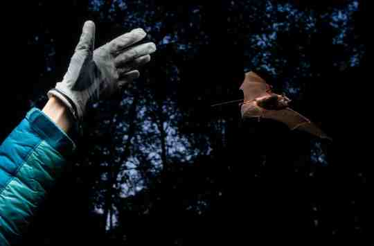 Which came first in Alaska: cabins or bats?