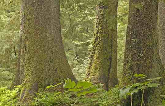 Forest Service Paying Timber Industry to Pick Which Trees It Wants in Alaska's Tongass National Forest