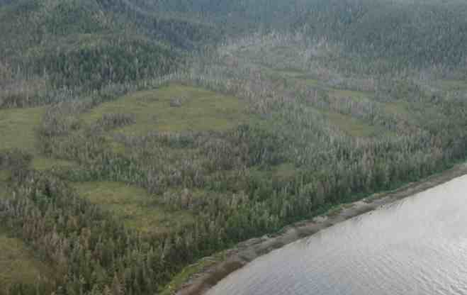 Dead Trees Could Bring New Life to Southeast Alaska Lumber Mills