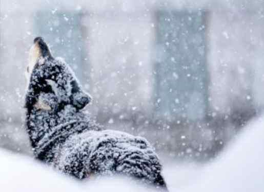 Musher start order set for Iditarod 49!