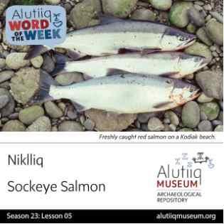 Sockeye Salmon-Alutiiq Word of the Week-July 26th