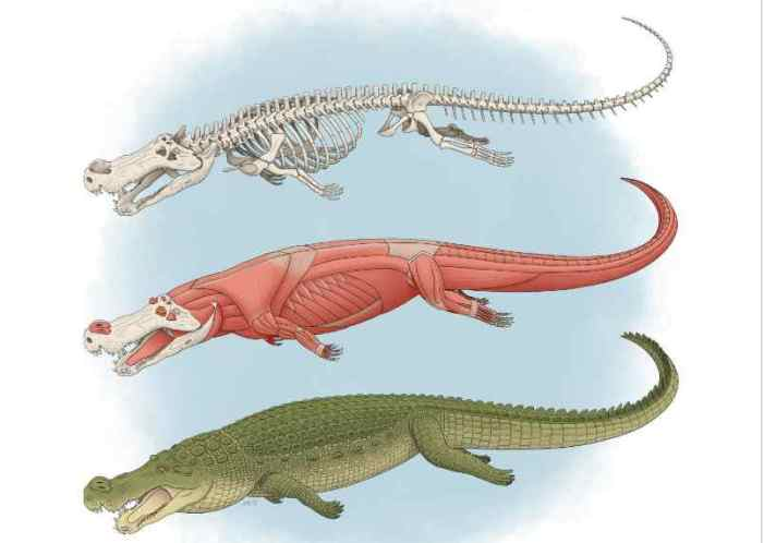 New Study Confirms the Power of Deinosuchus and Its 'teeth the Size of Bananas'