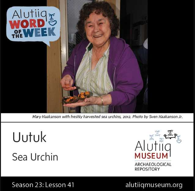 Sea Urchin-Alutiiq Word of  the Week-April 5th