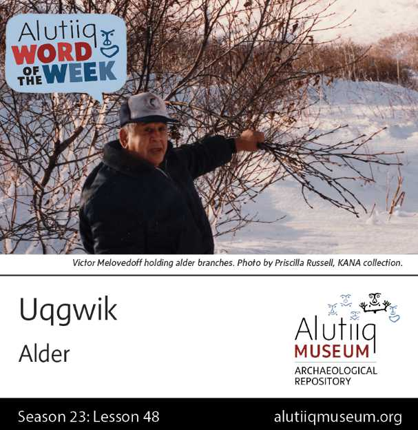 Alder-Alutiiq Word of the Week-May 23rd