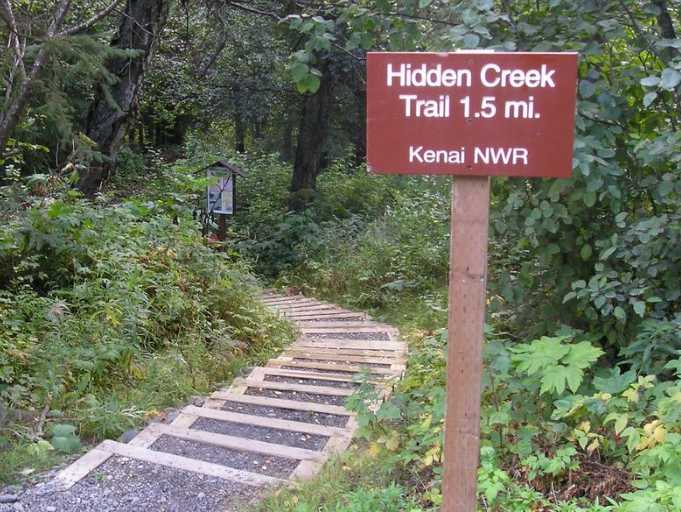 Two Campers Injured in Hidden Creek Bear Attack Saturday