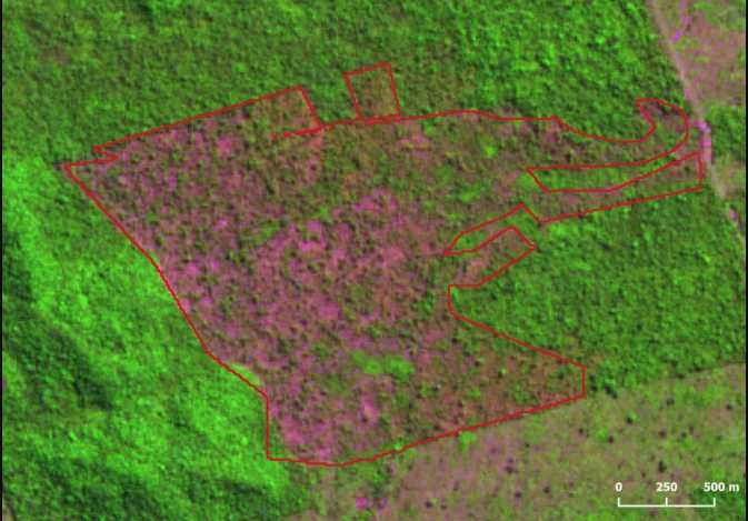 'Out of Control': Brazilian Amazon Deforestation Hits Highest Level in a Decade