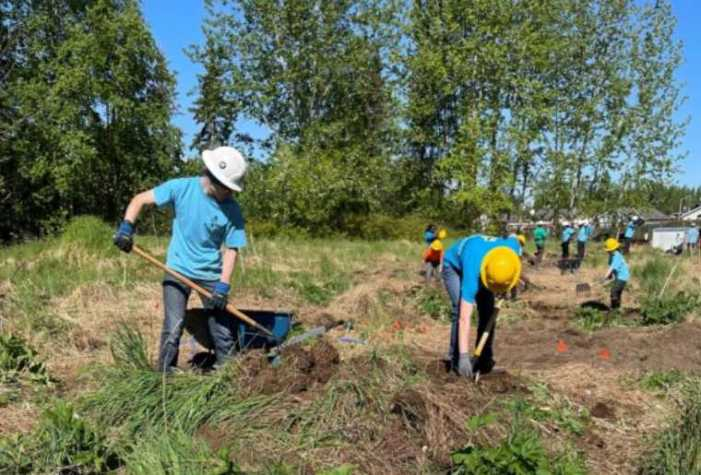 Healthy Fish Need Healthy Forests: Restoring Forest Health After Spruce Bark Beetle Kill